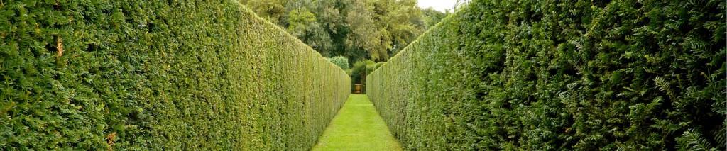 Hedge Trimming and Cutting Vaud & Geneva, Switzerland