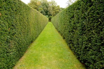 Hedge Cutting & Tree Pruning